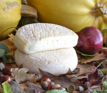 Sapidus queijo